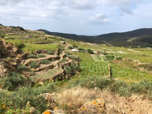 Terreni-Piana-di-Ghirlanda-Vendita-Pantelleria